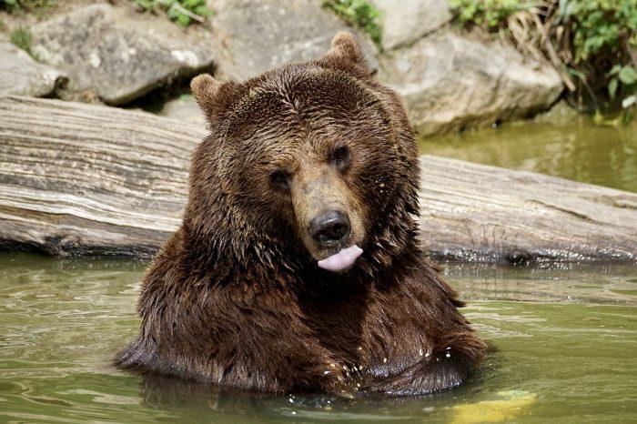 bear-2478149_1280